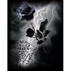ALCHEMY GOTHIC BLACK ROSE. MULTIPACK OF 6